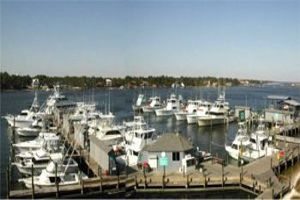 Zeke's Charter Fleet Orange Beach, AL Recreation,